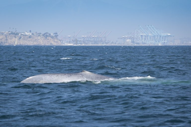2020's top ocean news stories (commentary)