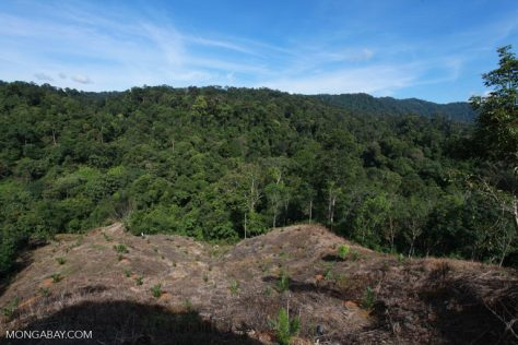 New oil palm planting near a protected area in Indonesia. Image by Rhett A. Butler/Mongabay.