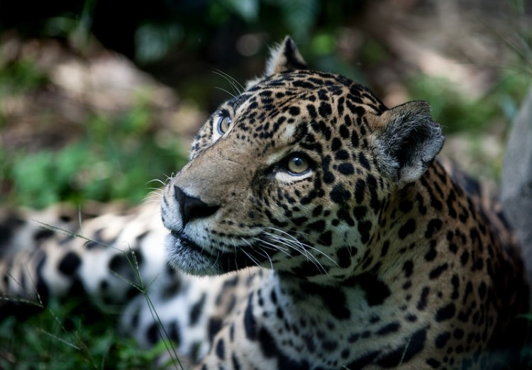 New areas of primary forest cleared in Brazil's 'lawless' Lábrea