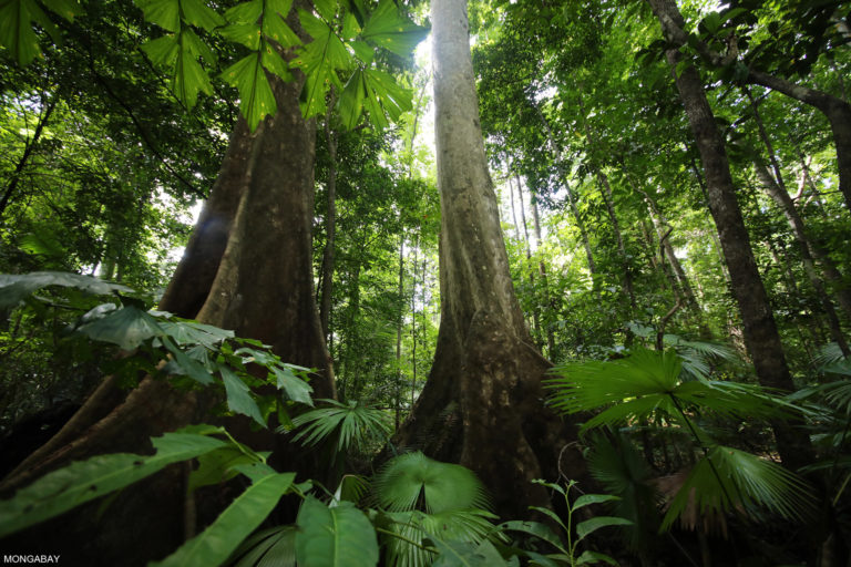 indonesia_sulawesi_171067 - Notizie ambientale