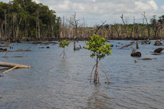 Indian Ocean tsunami: Nicobar Islands lost 97 percent of mangrove ...