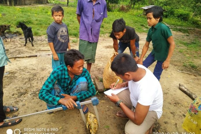Trained parabiologists have helped rescue over 130 specimens of turtles and tortoises belonging to five different species, including the critically endangered Asian giant tortoises, Arakan forest turtle, keeled box turtle, and elongated tortoises in Bangladesh. Photo by Creative Conservation Alliance.