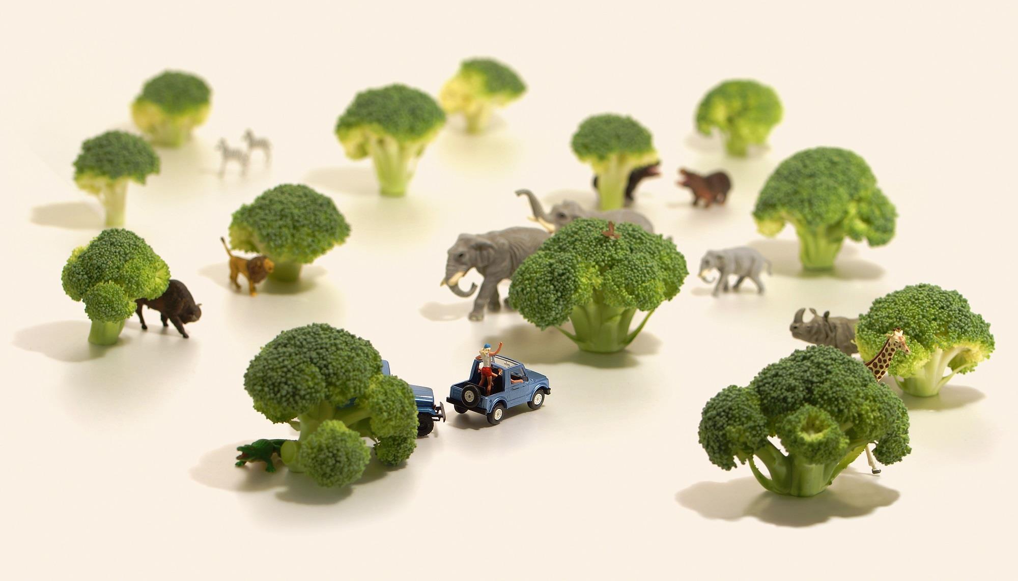 文青就是腳勤:到花椰菜森林冒險吧!田中達也的奇幻微型世界療癒人心   田中達也,當是境界。
