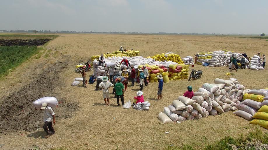 Nông nghiệp, nông dân, xuất khẩu, được mùa rớt giá, nông sản, lúa gạo, Đổi mới, Đặng Kim Sơn, Vũ Trọng Khải