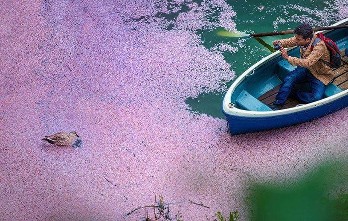 người Trung Quốc, hoa anh đào Nhật, du lịch, núi Phú Sĩ, mì Ramen