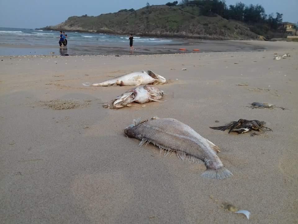 minh bạch và trách nhiệm giải trình, cá chết, xử lý khủng hoảng, hy sinh môi trường lấy tăng trưởng, ô nhiễm