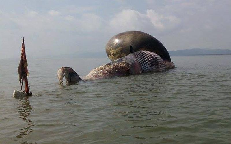 cá voi, cá voi chết, cá voi dạt bờ