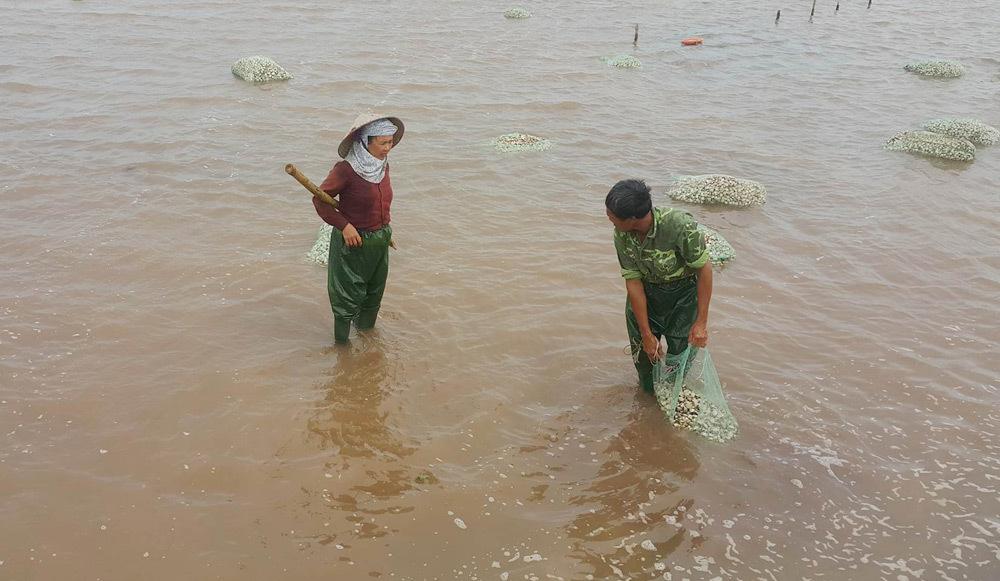 Bão số 1, tin bão, tin bão mới nhất, cơn bão số 1, Nam Định, ngập sâu