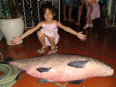 cá chết Hồ Tây, trắm đen hồ tây, câu cá, săn cá khủng long, hồ tây, lăng xê, ba tiêu, võng thị, Trích Sài