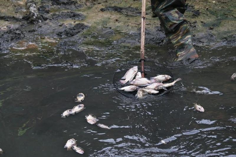 Đà Nẵng, cá chết do ô nhiễm, cá chết hàng loạt, Đà Nẵng, cá chết hàng loạt, phòng Tài nguyên môi trường, công ty thoát nước