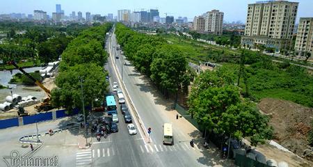 Hà Nội đề xuất thay thế 4.000 cây xà cừ