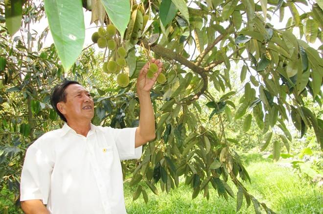 phân-dơi, làm-giàu, trồng-sầu-riêng, nâng-cao-thu-nhập