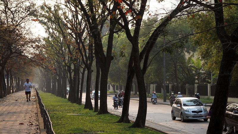 6.700 cây xanh; Hà Nội; chặt hạ