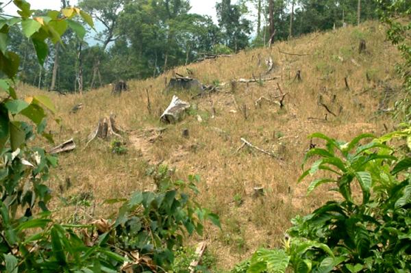 trồng rừng, cho thuê, Quảng Nam, an ninh, Innovgreen, Trung Quốc, an-ninh, trồng-rừng, cho-thuê, Trung-Quốc