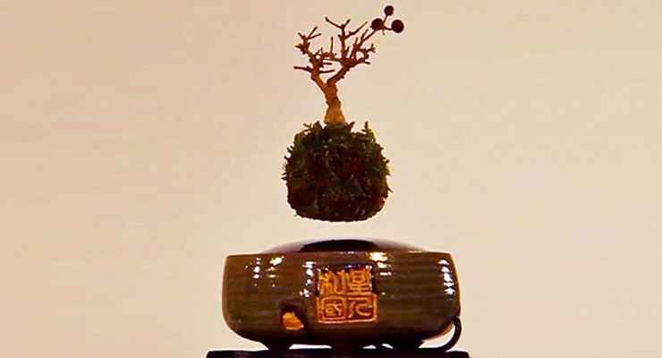 Air Bonsai Hoshinchu