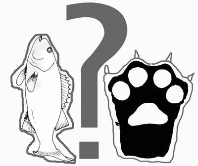 魚與熊掌不可兼得詞條圖冊圖片