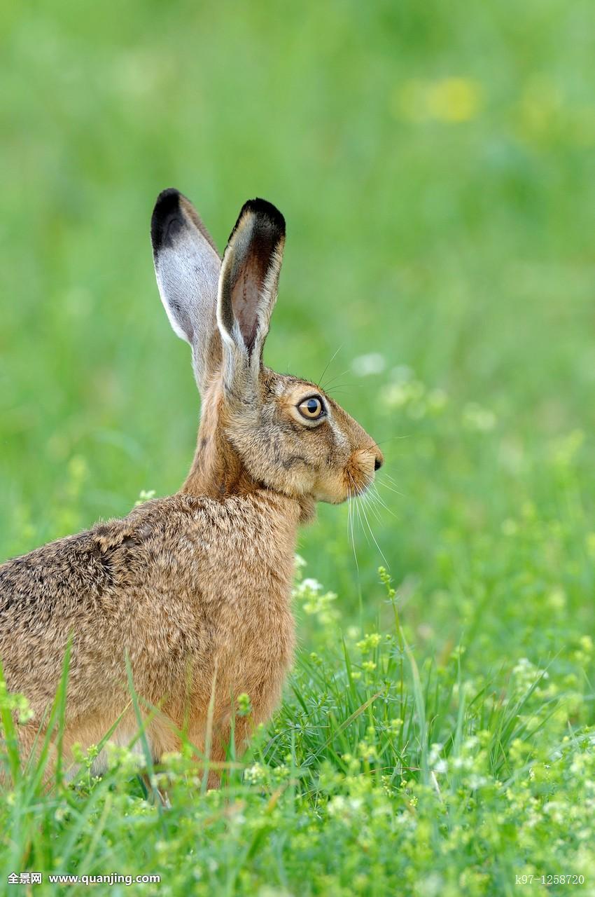 棕兔完整版迅雷-棕兔 電影迅雷下載_棕兔完整迅雷_棕兔電影完整版免費bd_棕兔完整版迅雷下載