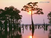 Atchafalaya Bayou, Louisiana - 1600x1200 - ID 31.jpg image hosted at ImgTaxi.com