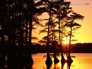 Sunset on Reelfoot Lake, Tennessee - 1600x1200 -.jpg image hosted at ImgTaxi.com