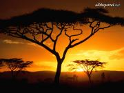 Tanzanian Sunset - 1600x1200 - ID 36728.jpg image hosted at ImgTaxi.com