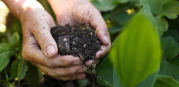 Resultado de imagem para fertilizantes naturais