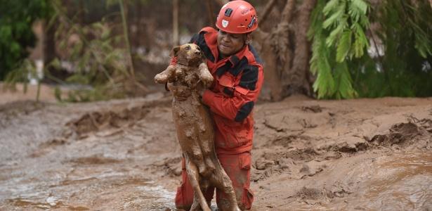 https://i0.wp.com/imguol.com/c/noticias/56/2015/11/09/9nov2015---bombeiro-resgata-uma-cadela-de-dentro-da-lama-em-paracatu-de-baixo-minas-gerais-dias-apos-o-rompimento-de-duas-barragens-da-mineradora-samarco-destruir-a-vila-de-bento-rodrigues-e-outras-1447090525461_615x300.jpg