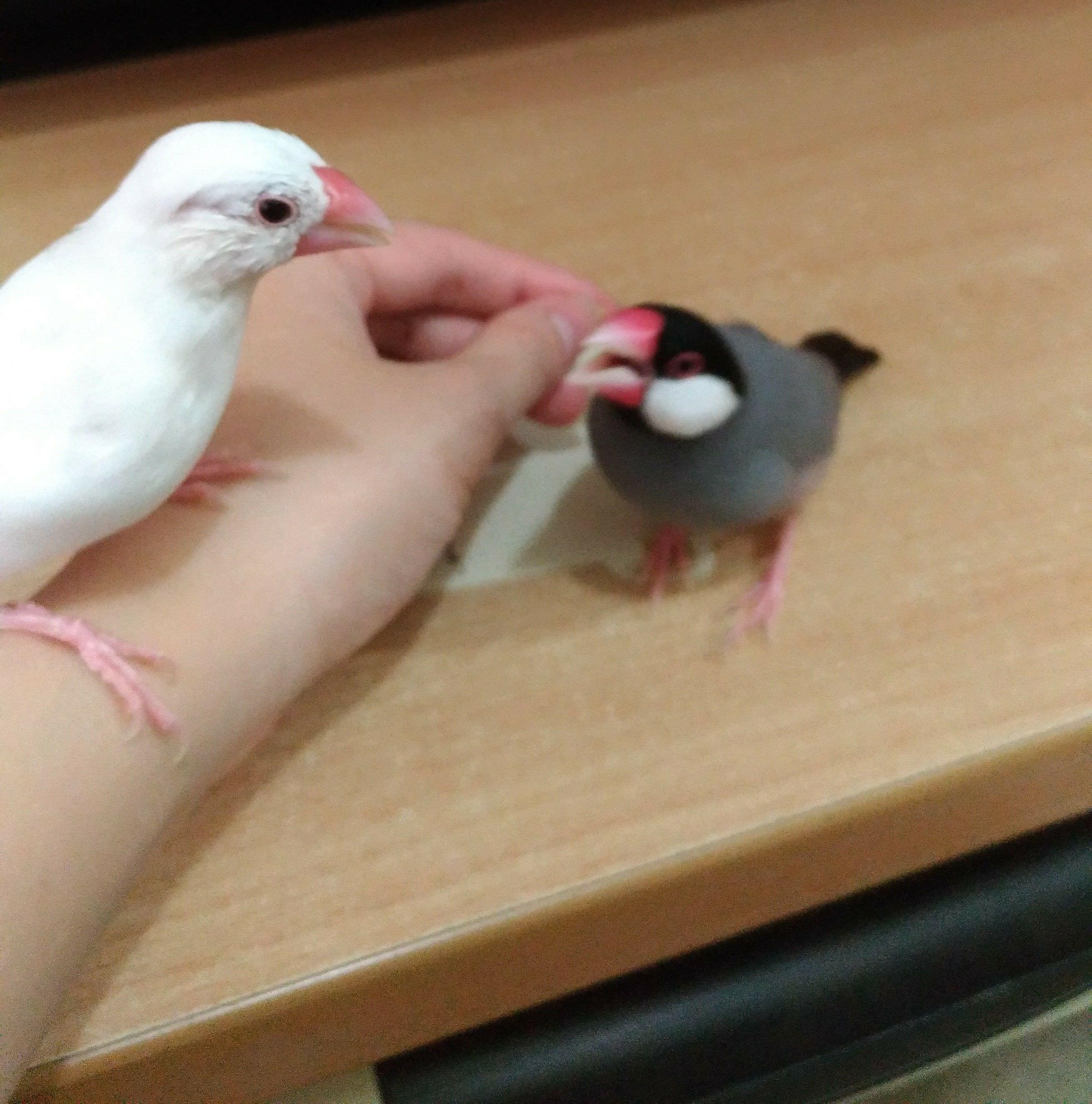 #鳥醫院#新竹地區 鳥類動物醫院分享 - 寵物板 | Dcard