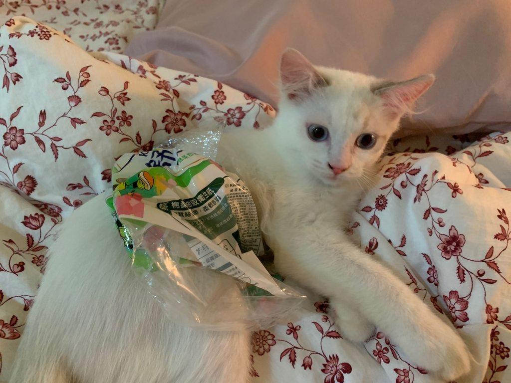 會自己穿衣服的貓 - 寵物板 | Dcard