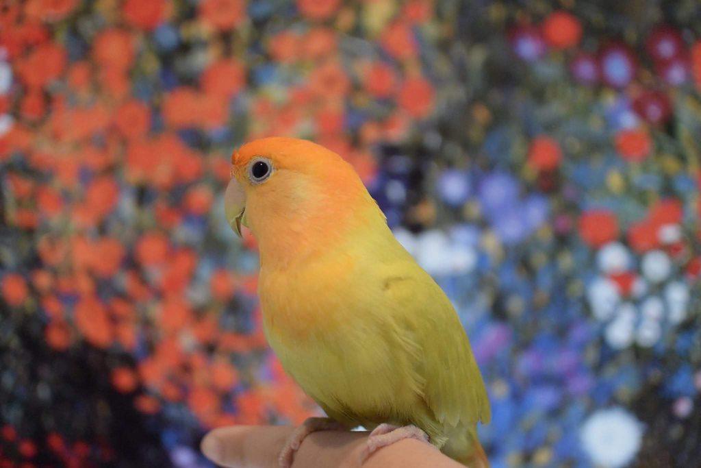 #圖多 #推薦 鸚鵡住宿 - 寵物板   Dcard