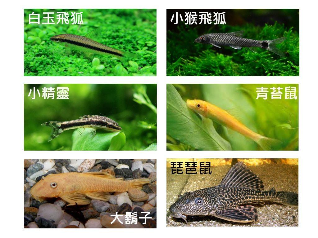 [科普][興趣] 養魚經 ch.3 工具動物 - 寵物板 | Dcard