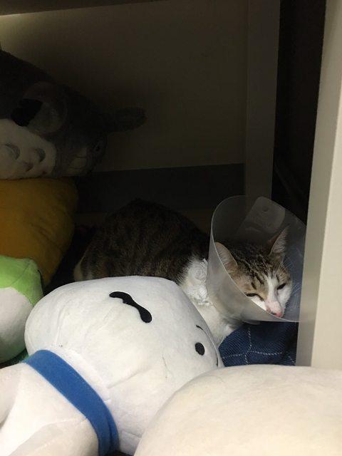 #問 母貓結紮後不吃不喝 - 寵物板 | Dcard