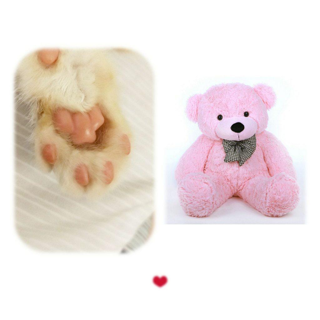 粉紅泰迪熊 - 寵物板 | Dcard