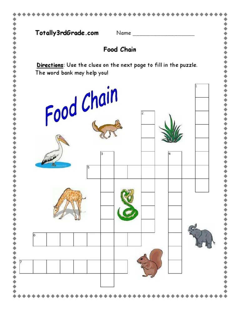 small resolution of 3rd Grade   Food Chain Worksheet
