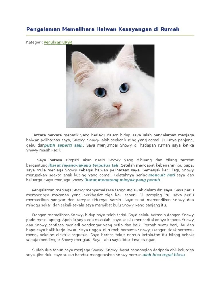 Memandikan Anak Kucing : memandikan, kucing, Pengalaman, Memelihara, Haiwan, Kesayangan, Rumah