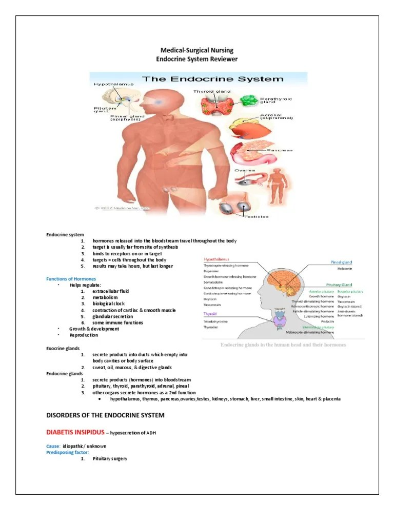 Endocrine Glands And Functions