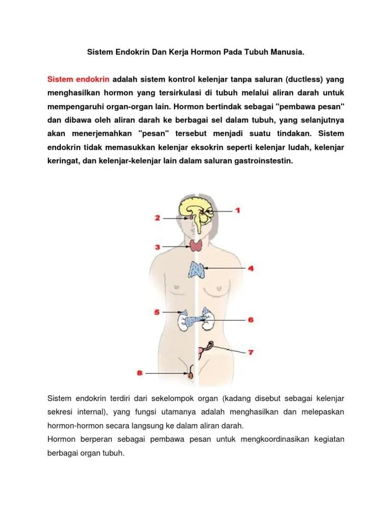 Sistem Hormon Manusia : sistem, hormon, manusia, Sistem, Endokrin, Kerja, Hormon, Tubuh, Manusia