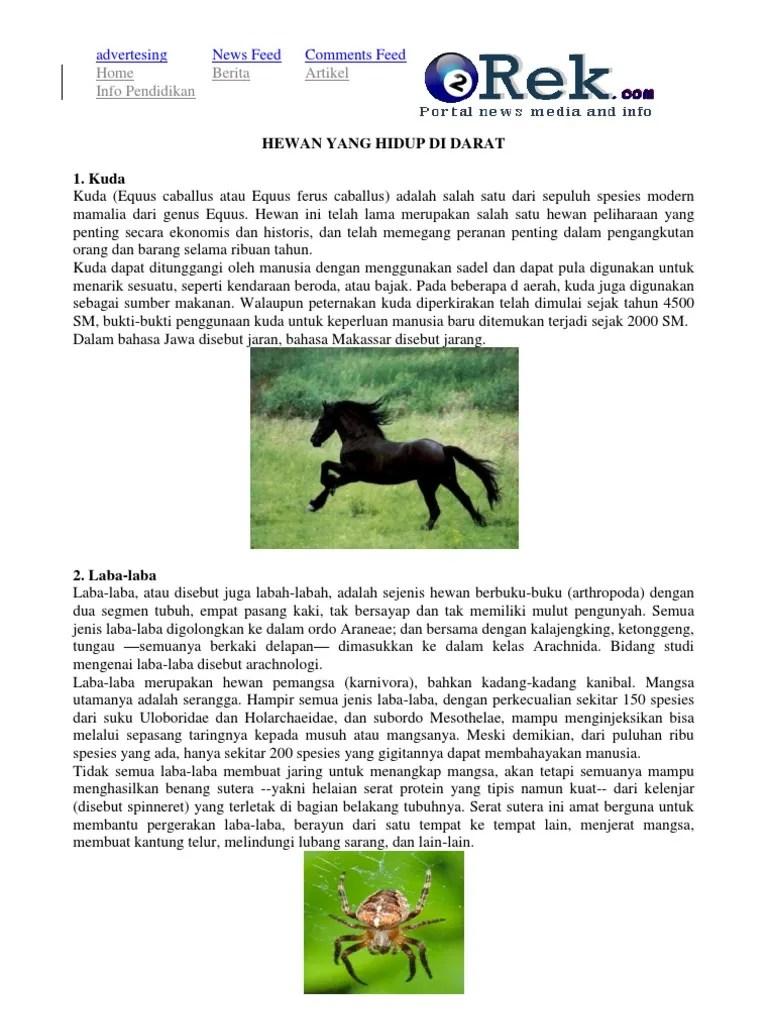 Ciri Ciri Hewan Beruang : hewan, beruang, Beruang, Dalam, Bahasa, Inggris, Cirinya, Cute766