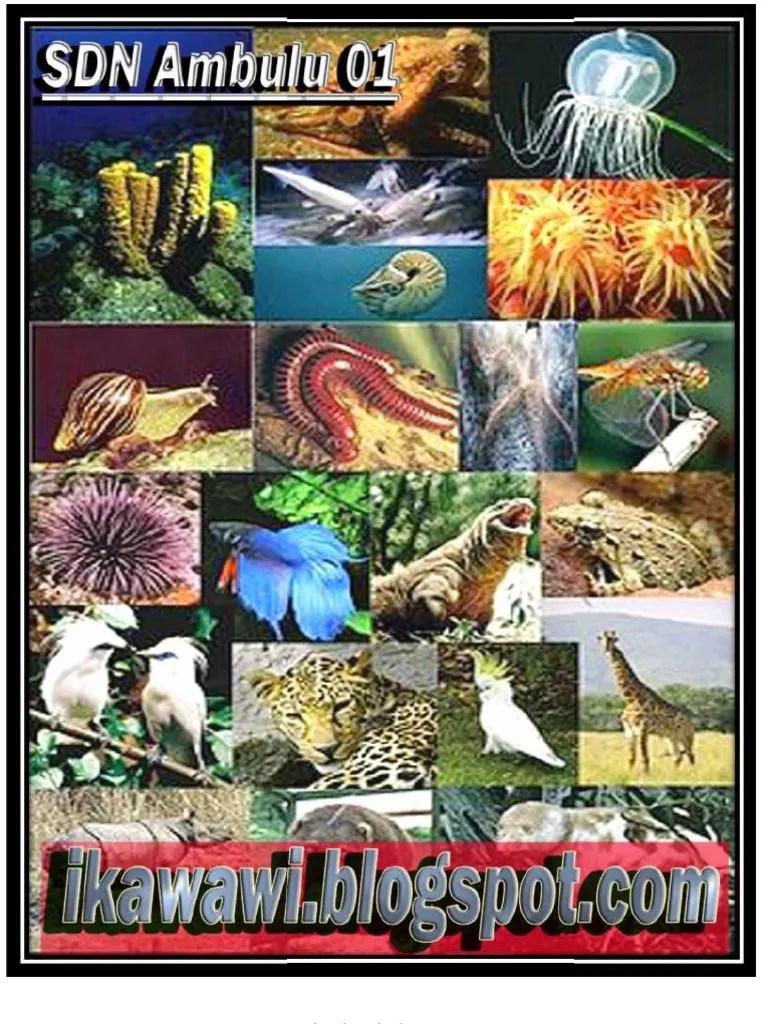 Sebutkan Hewan Ovovivipar : sebutkan, hewan, ovovivipar, Contoh, Hewan, Ovovivipar, Resource