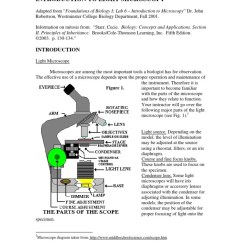Onion Root Tip Diagram 2007 Nissan Frontier Radio Wiring Mitosis In Cells Cell Nucleus
