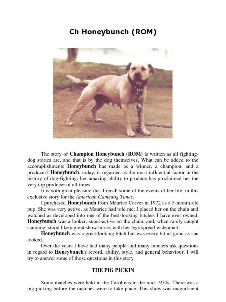 Honeybunch Pitbull Kennels : honeybunch, pitbull, kennels, Honeybunch, (ROM), Domesticated, Animals