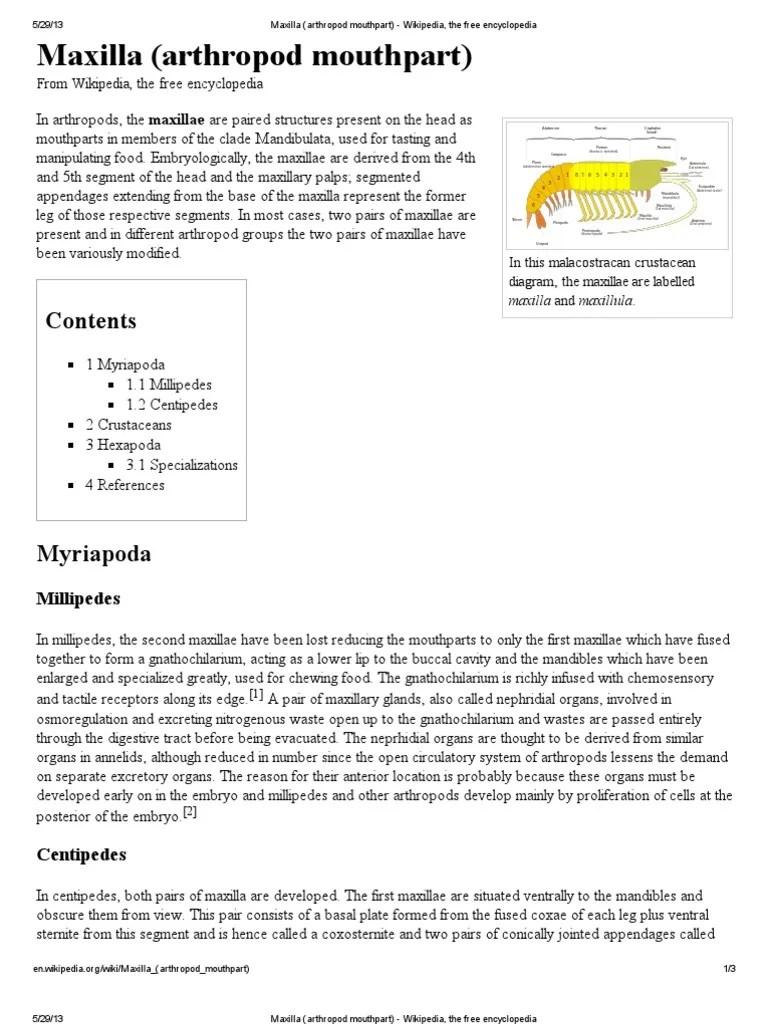 maxilla arthropod mouthpart protostomes arthropods centipede diagram http enwikipediaorg wiki maxillaarthropod [ 768 x 1024 Pixel ]