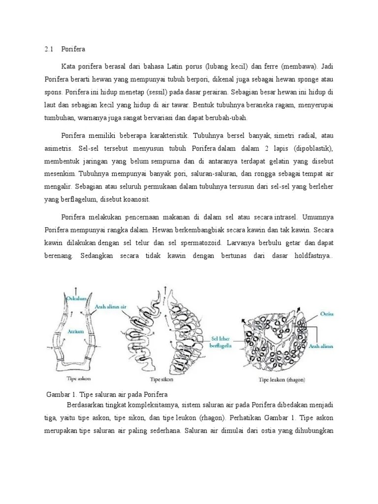Saluran Air Pada Porifera : saluran, porifera, Porifera