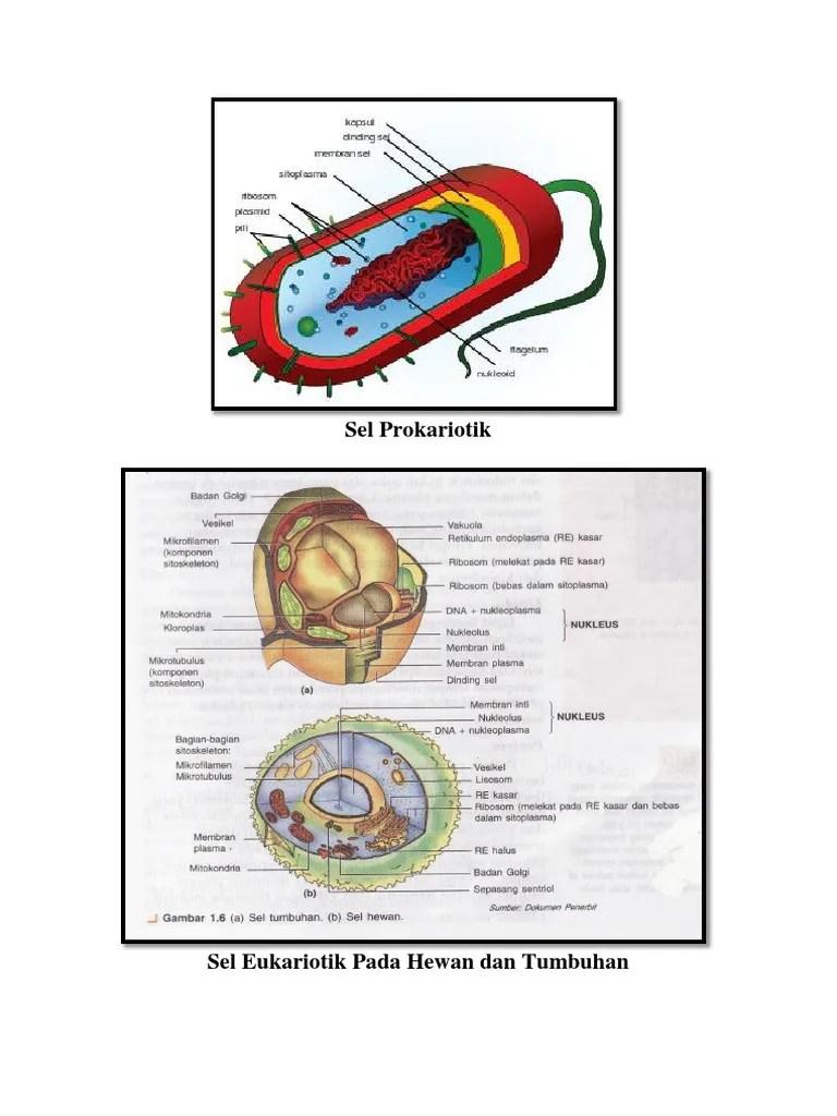Gambar Membran Inti : gambar, membran, Gambar, Prokariotik, Eukariotik.docx