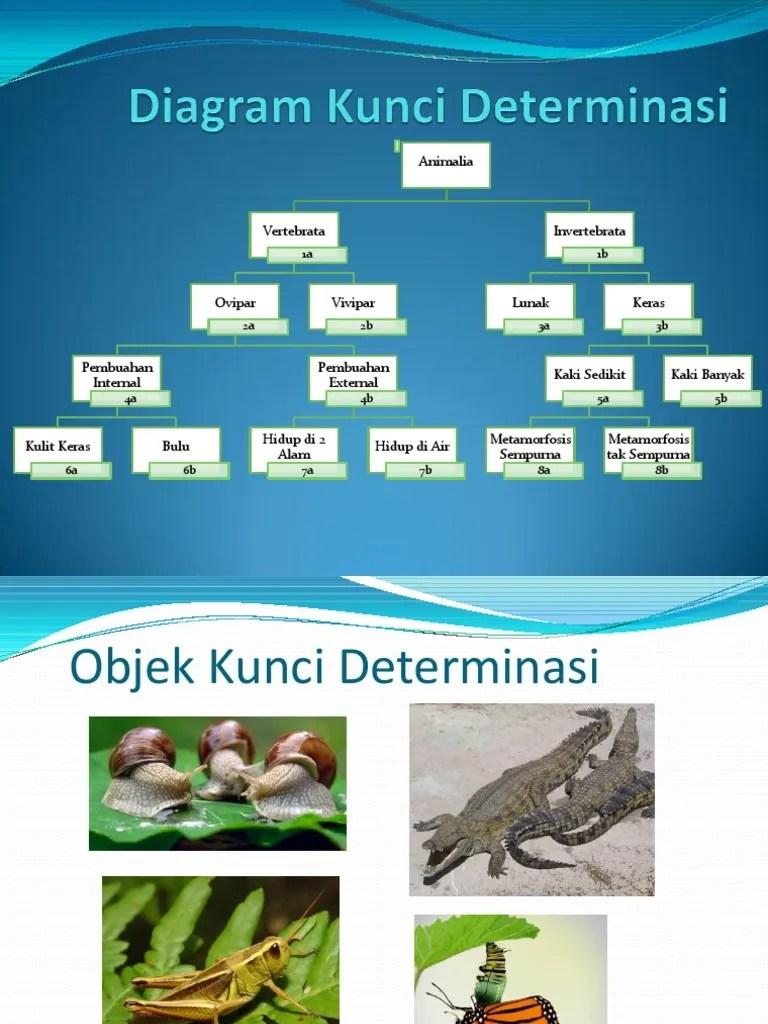Contoh Kunci Dikotom : contoh, kunci, dikotom, Kunci, Determinasi.ppt
