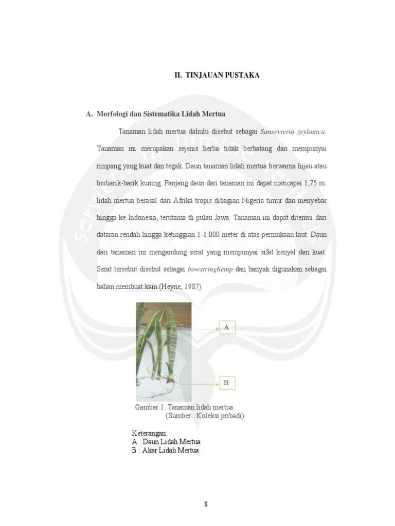 Klasifikasi Tanaman Lidah Mertua : klasifikasi, tanaman, lidah, mertua, Jurnal, Klasifikasi, Tanaman, Lidah, Mertua