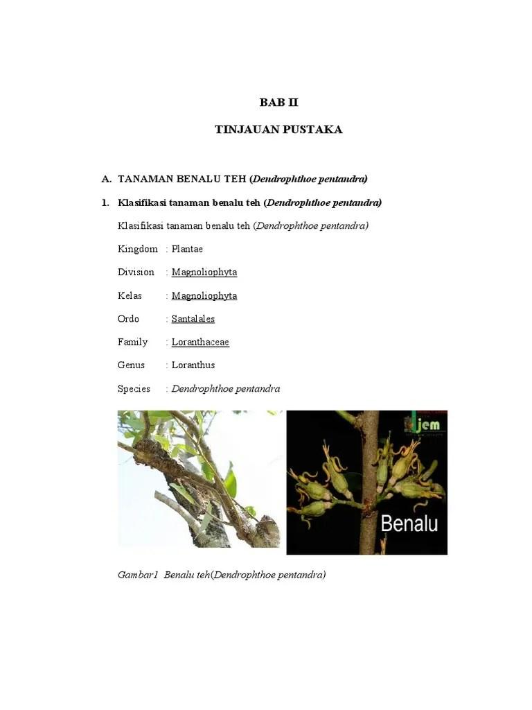 Klasifikasi Benalu : klasifikasi, benalu