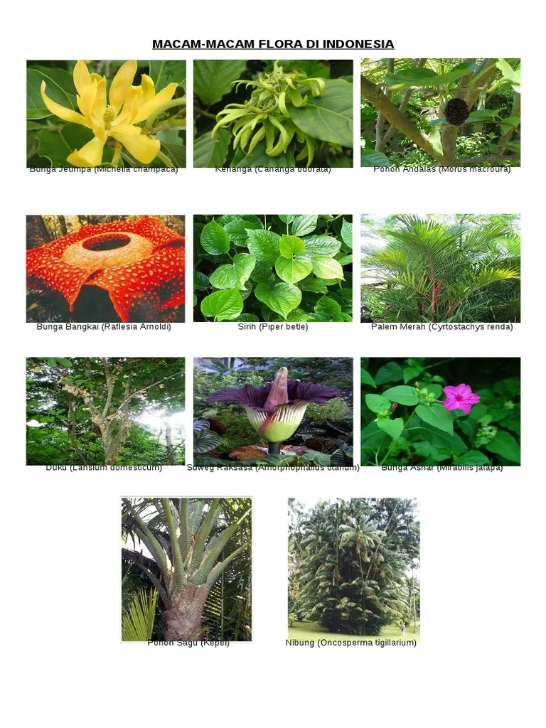 Flora Asiatis : flora, asiatis, Macam, Flora