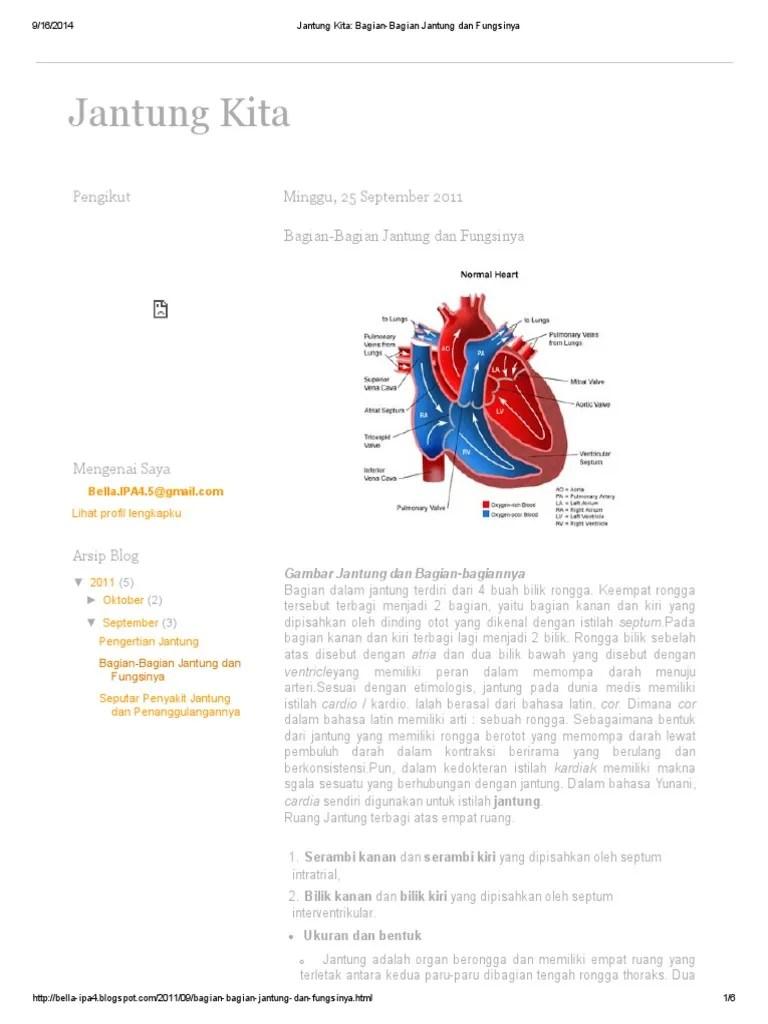 Gambar Bagian Jantung Dan Fungsinya : gambar, bagian, jantung, fungsinya, Jantung, Kita_, Bagian-Bagian, Fungsinya