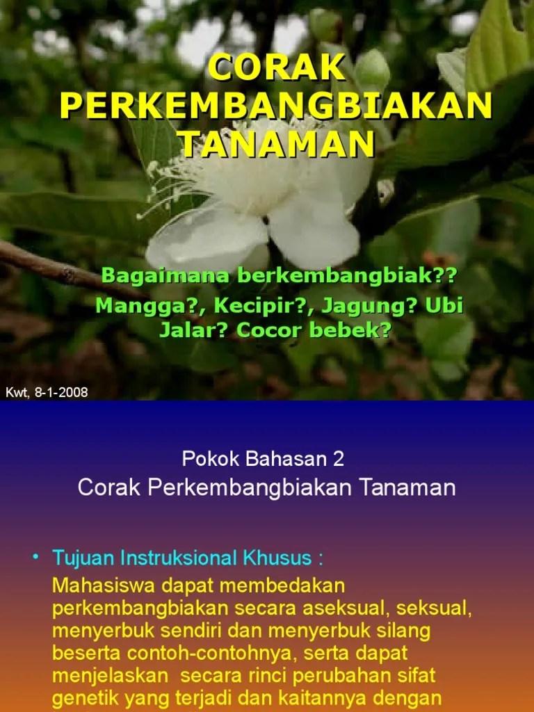 Materi Pemuliaan Tanaman : materi, pemuliaan, tanaman, Dasar, Pemuliaan, Tanaman, Materi, Sebelum