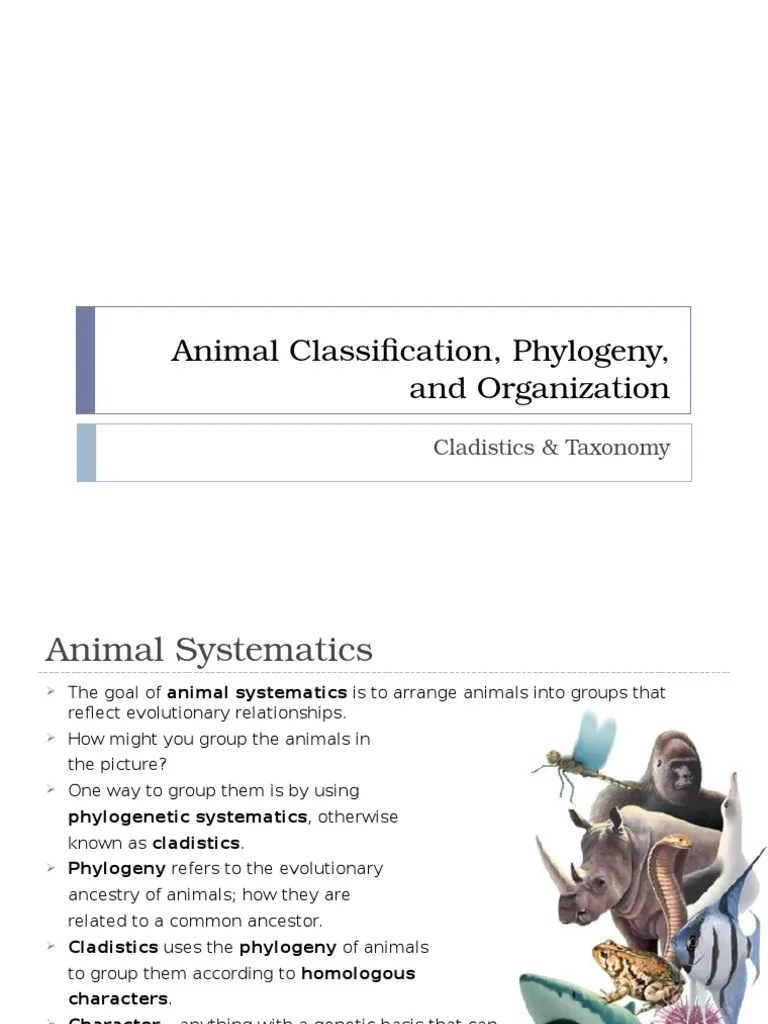small resolution of animal classification phylogeny and organization 1   Phylogenetic Tree    Clade
